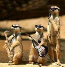 groupe-suricate