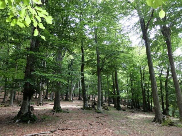 Forêt des Albères