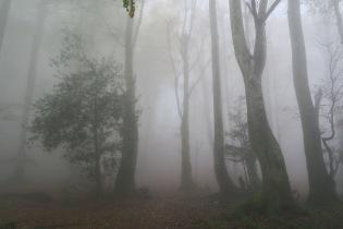 9 h : La chape de brouillard