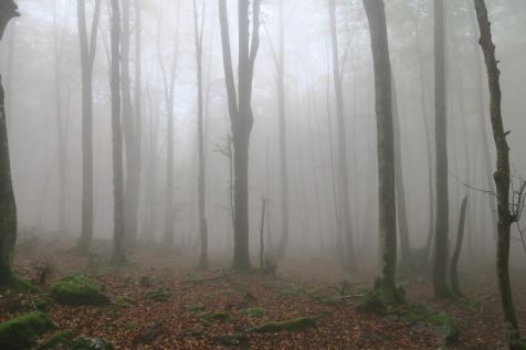 16 h : La chape de brouillard