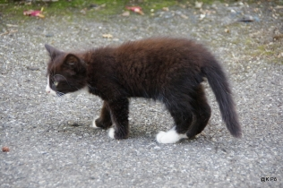 chat noir de Kusturica