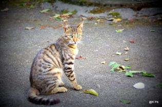 Tigre des jardins (très beau)